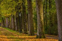 Herbst in Halver von Simone Rein