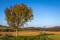 Herbst in Hemer von Simone Rein