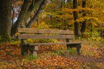 Herbst auf der Nordhelle by Simone Rein
