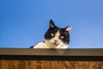 Katze von Mathias Karner