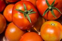 Tomaten by Mathias Karner