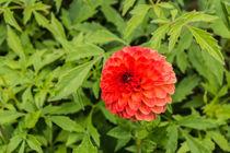 Blume von Mathias Karner