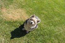 Hund von Mathias Karner