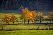 Herbst in Herscheid by Simone Rein