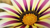 Seele der Blume von Mathias Karner