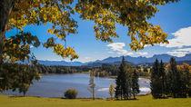 Herbst am Schwaltenweiher im Ostallgäu von Christine Horn