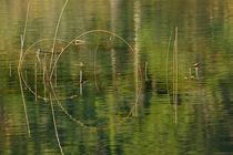 Herbstwasser von fostern