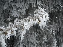 Winter in Westfeld von Kristin König-Salbreiter
