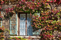 An der Schlossmauer - Altes Fenster mit wildem Wein von Chris Berger