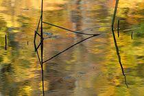 Der Herbst malt ... by fostern