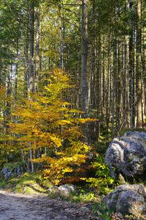 Herbstfarben vor dem Nadelwald by Bernhard Kaiser