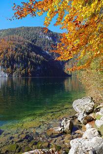 Herbst am Ufer des Königssee by Bernhard Kaiser