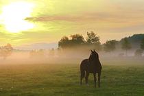 Pferd im Frühling by Bernhard Kaiser