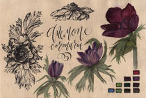 Anemone flower, illustration, watercolor by Ellen Paul watercolor