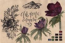 Anemone flower, illustration, watercolor von Ellen Paul watercolor