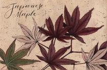 Japanese maple, red maple, floral, flower, botanical, watercolor by Ellen Paul watercolor