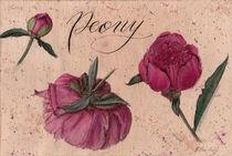 Peony, flower, floral, botanical, vintage style, watercolor by Ellen Paul watercolor