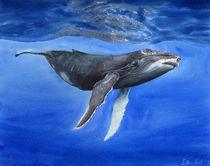 Underwater whale, HUMPBACK WHALE, deep water, watercolor von Ellen Paul watercolor