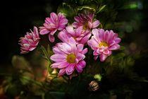 Zarte Blumen von Claudia Evans