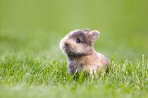 Kaninchen von Bettina Dittmann