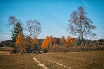 Herbstimpression Irndorfer Hardt I - Naturpark Obere Donau von Christine Horn