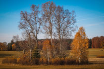 Herbstimpression Irndorfer Hardt II - Naturpark Obere Donau by Christine Horn