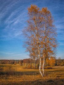 Herbstimpression Irndorfer Hardt IV - Naturpark Obere Donau von Christine Horn