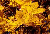 Goldener Herbst by Peter Hebgen