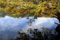 Herbst am See von Peter Hebgen