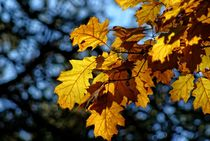 Herbstfarben by Peter Hebgen