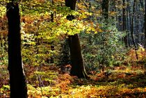 Herbstwald by Peter Hebgen
