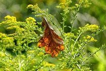 Der Sommer geht, der Herbst kommt. by Peter Hebgen