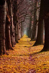 Weg in den Herbst by Peter Hebgen