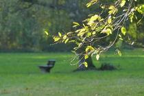 Herbst im Park von maja-310