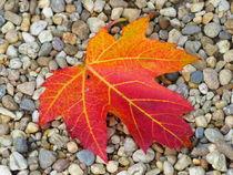 Herbstlaub-1 von maja-310
