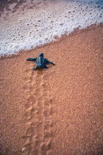 Lobo - kleine Schildkröte by Lena Wendt