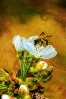 Pollenflug von Claudia Evans
