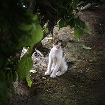 Kätschen unter der Hecke by Jens Heynold