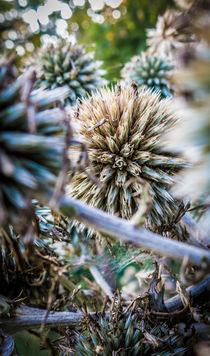 seed balls by Erik Mugira