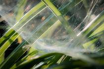 milky web by Erik Mugira