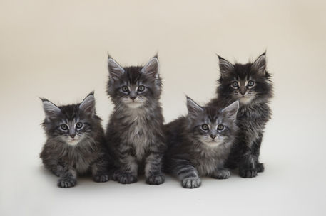 Dsc-1690-dot-mc-kittens1-06-17