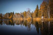 Herbstliche Stimmung am Nillweiher im Pfrunger-Burgweiler Ried von Christine Horn