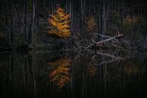 Licht im Wald von Thomas Matzl