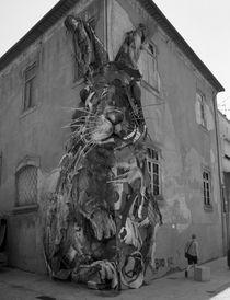 Bunny Deluxe I by joespics