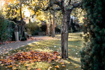 Herbst im Park by la-mola-lighthouse