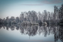 Der Nillsee im Pfrunger-Burgweiler Ried von Christine Horn