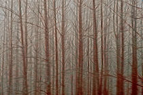 Birch Tree Abstracts by Jim Corwin