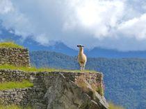 Machu Picchu and the Llama  by Annika  Leichtweiss