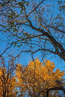 Yellow November  by Enache Armand Iustinian