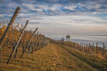 In den Weinbergen von Meersburg - Bodensee von Christine Horn